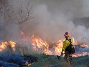 Fire Fighter in Front of Wildlands Fire